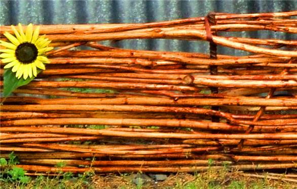Плетень из ивовой лозы своими руками