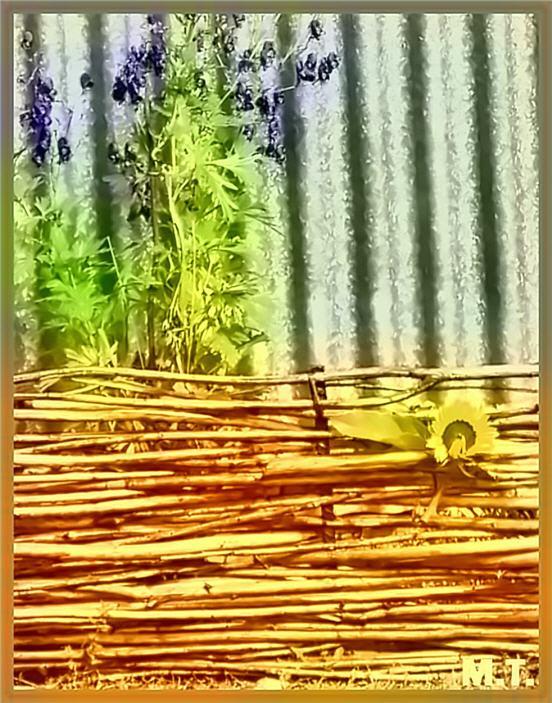 Плетень из ивовых веток